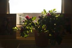 Flores no terraço Fotografia de Stock