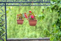 Flores no vasos de flores de suspensão Fotografia de Stock