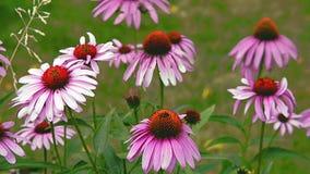 Flores no vento video estoque