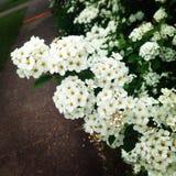 Flores no verão Imagens de Stock