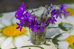 Flores no vidro imagens de stock