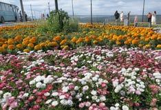 Flores nortes Imagens de Stock Royalty Free