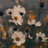 Flores nortes de Tailândia Fotos de Stock