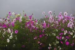 Flores nortes de Tailândia Fotografia de Stock