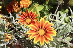 Flores nos ísquios, natureza bonita imagem de stock royalty free