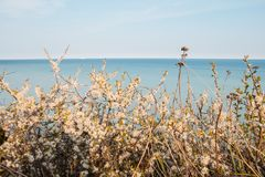 Flores nos penhascos de giz Mons Klint Dinamarca Fotos de Stock Royalty Free