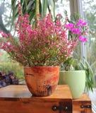 Flores nos potenciômetros Fotos de Stock Royalty Free
