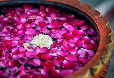 Flores nos TERMAS foto de stock royalty free