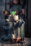 Flores novas da mola na vertente de madeira Imagens de Stock Royalty Free