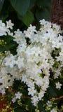 Flores nupciais bonitas da grinalda Imagem de Stock Royalty Free
