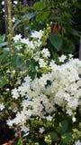 Flores nupciais da grinalda Imagens de Stock Royalty Free