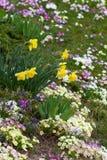 flores orientais da primavera Imagens de Stock