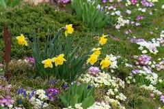 flores orientais da primavera Foto de Stock Royalty Free