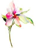Flores originais do verão Foto de Stock Royalty Free