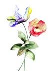 Flores originais do verão Foto de Stock
