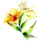Flores originales del lirio Fotografía de archivo libre de regalías
