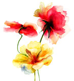 Flores originales del verano Imagen de archivo