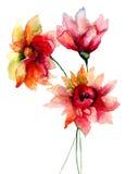 Flores originales del verano Foto de archivo libre de regalías