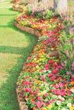 Flores ornamentales coloridas que florecen en modelos de la curva en el jardín, fondo enorme de la naturaleza del grupo del viola foto de archivo