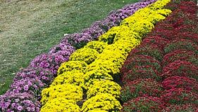 Flores outonais Imagens de Stock Royalty Free