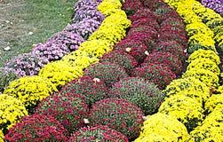 Flores outonais Imagens de Stock