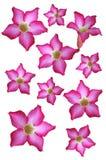 Flores púrpuras Imagen de archivo libre de regalías