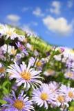 Flores púrpuras. Imagenes de archivo