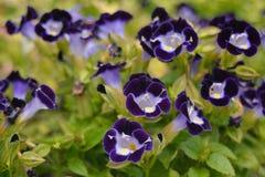 Flores púrpuras Imagen de archivo