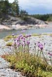 Flores púrpuras Imagenes de archivo