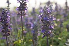 Flores púrpuras Foto de archivo