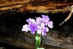 Flores púrpuras brillantes en el bosque bañado en luz del sol imagen de archivo libre de regalías