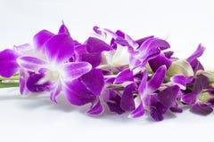Flores púrpuras coloridas de la orquídea Foto de archivo