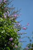 Flores púrpuras coloridas de la orquídea Foto de archivo libre de regalías