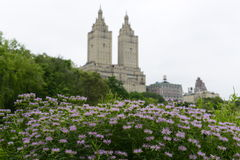 Flores púrpuras con arquitectura de la ciudad en fondo Foto de archivo