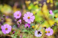 Flores púrpuras con el fondo borroso Foto de archivo