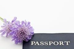 Flores púrpuras con el pasaporte del viaje Foto de archivo libre de regalías