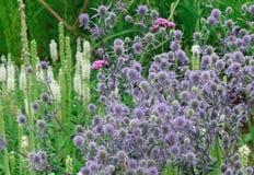 Flores púrpuras con la abeja de polinización Foto de archivo libre de regalías