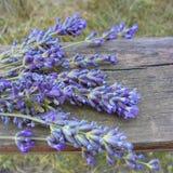 Flores púrpuras de la mentira de la inflorescencia de la lavanda en un viejo tablero de madera fotos de archivo