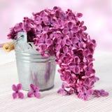 Flores púrpuras de la primavera de la lila Imágenes de archivo libres de regalías