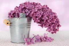 Flores púrpuras de la primavera de la lila Fotografía de archivo