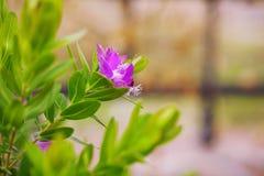 Flores púrpuras de la rama floral del fondo con verde Foto de archivo libre de regalías