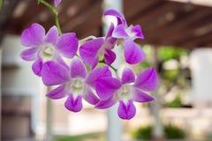 Flores púrpuras de las orquídeas Foto de archivo