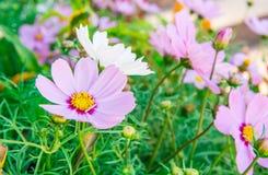 Flores púrpuras debajo del sol Foto de archivo