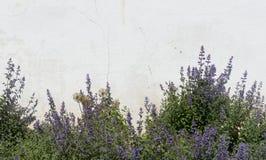 Flores púrpuras decorativas en el fondo del viejo blanco pl Fotografía de archivo libre de regalías
