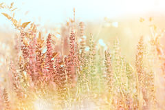 Flores púrpuras del prado Foto de archivo