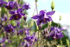 Flores púrpuras del resorte Imágenes de archivo libres de regalías