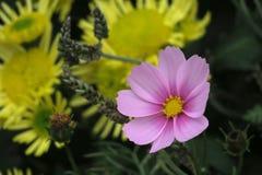 "Flores púrpuras en  Š del è del› del› del é del ² del ‰ del è del ç del ""del æ˜¥å¤©çš de la primavera "" Fotos de archivo"