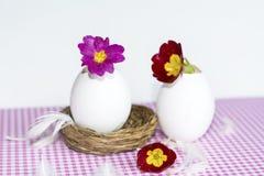 Flores púrpuras en cáscaras de huevo Imagen de archivo libre de regalías