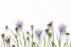 Flores púrpuras en el fondo blanco foto de archivo libre de regalías