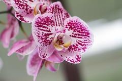 Flores púrpuras en el jardín Foto de archivo